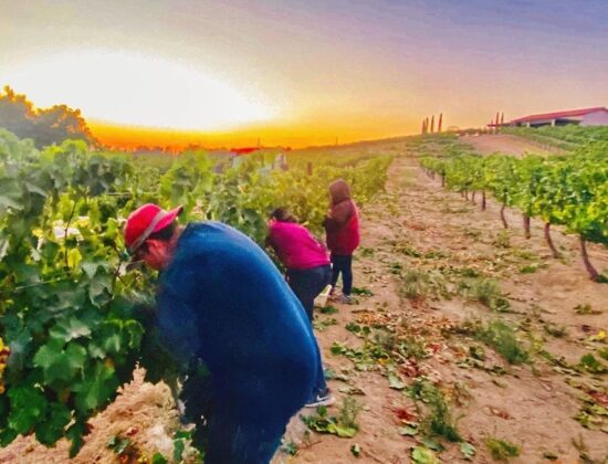 Temecula Valley Winegrowers Association